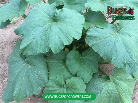 Bugs for Growers Blog