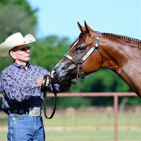 GoHorseShow   10 Quick Tips: Showing Halter with Ted