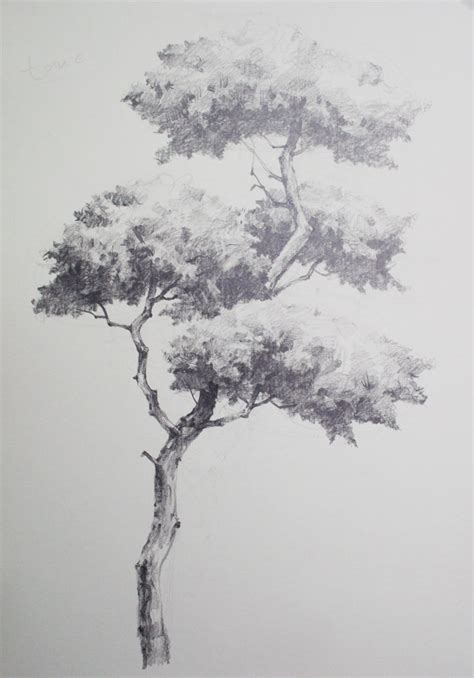 NAMIL ART: [drawing step by step] Drawing a Pine Tree