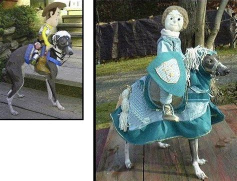 1000+ images about Italian greyhound costume on Pinterest