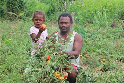 Seeds and tools help Solomon Island families recover from