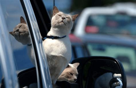 Best Cat Carrier for Car Travel & Long Distance (Updated