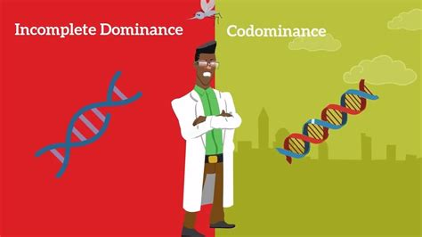 Genetics Basics: Difference between Codominance and