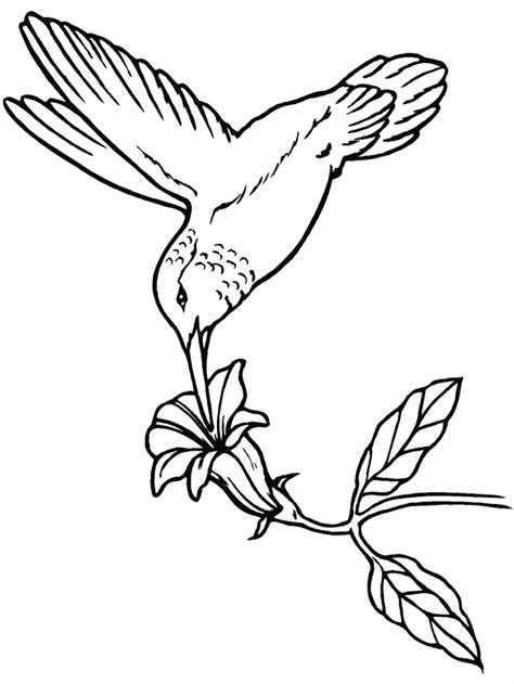 Birds Hummingbird Animals Coloring Pages & Coloring Book