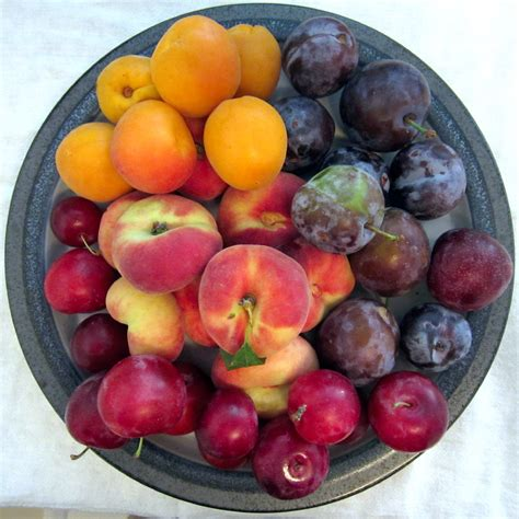 AJ in the Kitchen - Food and Wine Journal - Stone Fruit