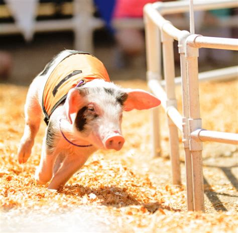 OC Fair 2017: Everything you need to know about tickets