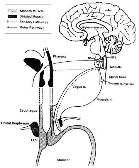 Is there a relationship between transient lower esophageal